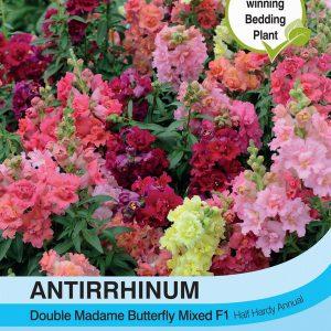 Antirrhinum Double Madam Butterfly Mixed