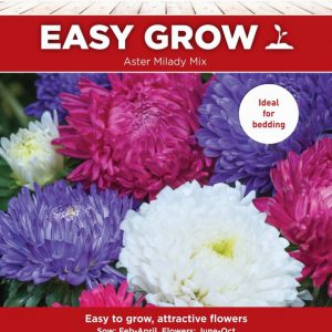 Aster Milady Mix Mixed