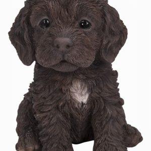 PP Cockapoo Puppy Chocolate