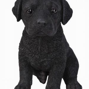 PP Black Labrador Pup F