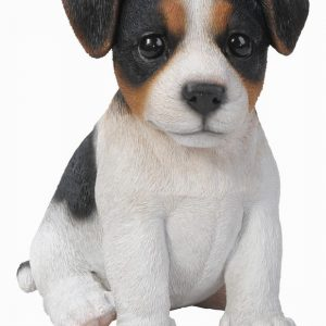 T/C Jack Russell Pup F