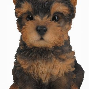 Yorkshire Terrier Pup F
