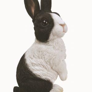 Lookout Dutch Rabbit C