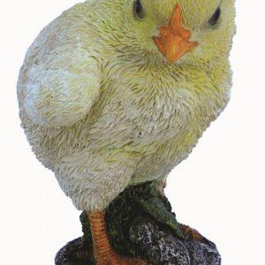 NF Chick F