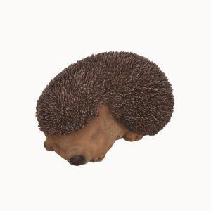 Sleeping Baby Hedgehog F