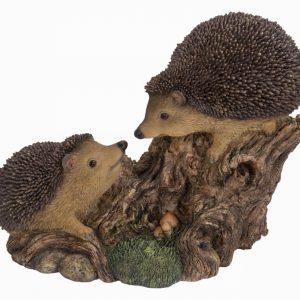 Playful Baby Hedgehogs B