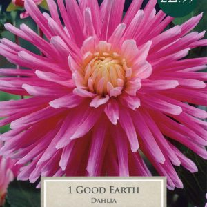 1 DAHLIA GOOD EARTH
