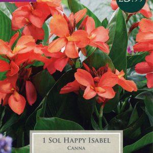 1 CANNA SOL HAPPY ISABEL