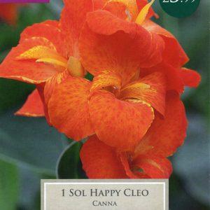 1 CANNA SOL HAPPY CLEO