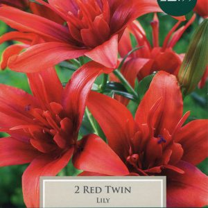 2 Exotic Lily Red Twin
