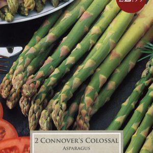 Asparagus Connover Colossal