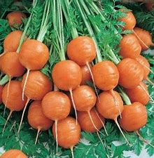 Carrot Baby Round Plants