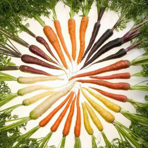 Carrot Rainbow Mixed Plants