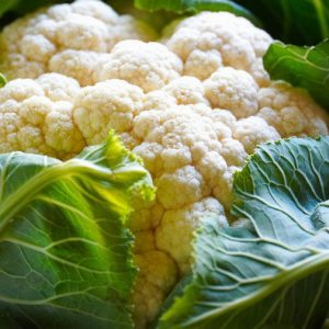 Cauliflower Plants
