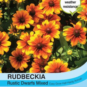 Rudbeckia Rustic Dwarfs Mixed