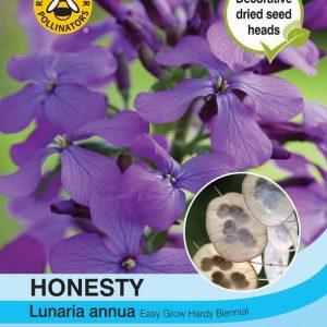 Honesty (Lunaria or Silver Dollar)