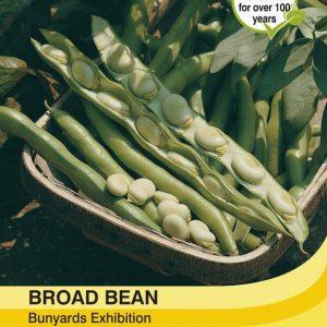 Broad Bean Bunyards Exhibition