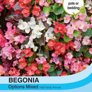 Begonia semperflorens Options Mixed