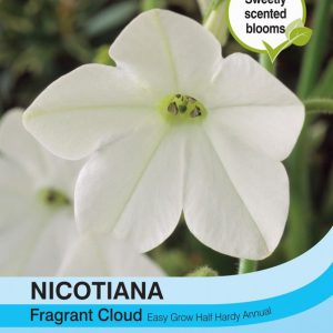 Nicotiana Fragrant Cloud