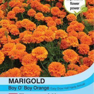 Marigold Boy O Boy Orange (French)