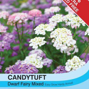 Candytuft Dwarf Fairy Mixed
