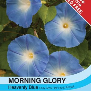 Morning Glory Heavenly Blue (Ipomoea)