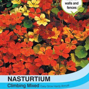 Nasturtium Climbing Mixed