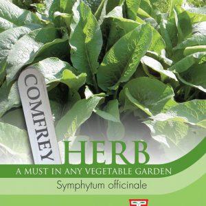 Herb Comfrey