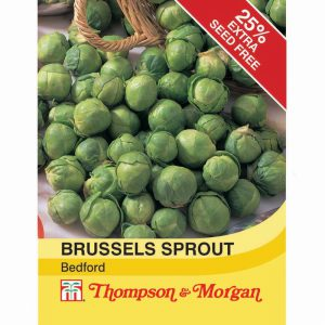 Brussels Sprout Bedford